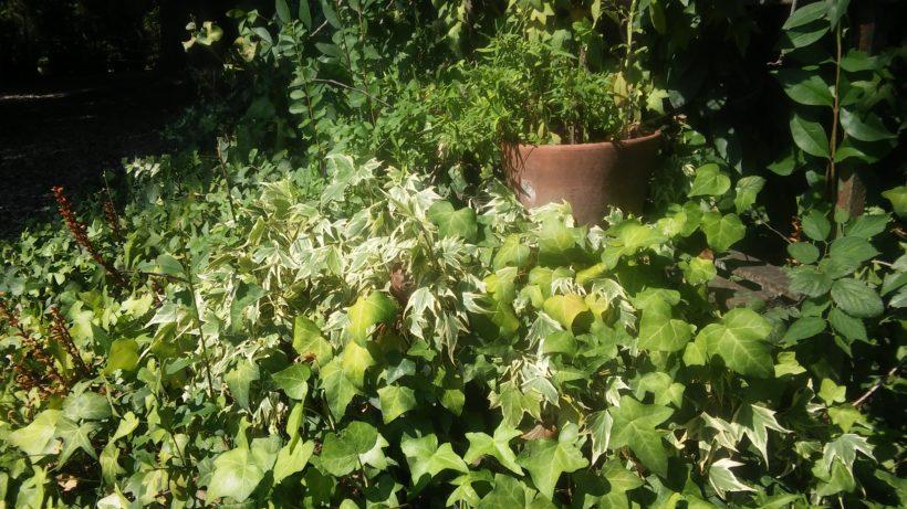 Poesia verde giardino 820x461 - Crema all'Arnica ed Artiglio del diavolo Verdesativa: opinione e recensione prezzi
