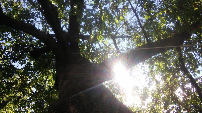 Festa degli alberi 820x461 - Amaca con sostegno per interni ed esterni: Amazonas Hammock AZ-4210000